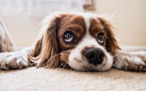 Jakie gry dla psa wybrać?